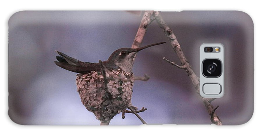 Nest Galaxy Case featuring the photograph Mama Hummer by Debbie May