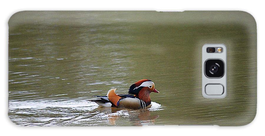 Mandarin Galaxy S8 Case featuring the photograph Mandarin Duck 20130507_41 by Tina Hopkins
