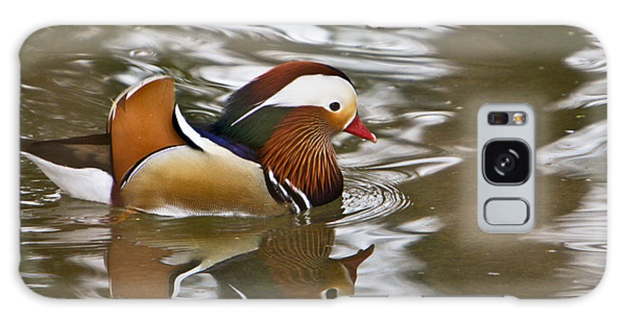 Mandrin Duck Swimming Galaxy S8 Case featuring the photograph Mandrin Duck With A Purpose by Douglas Barnett