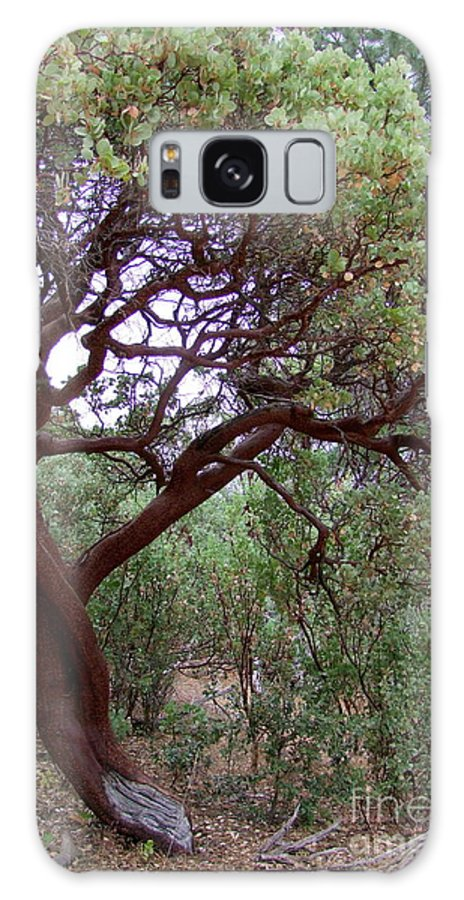 Manzanita Tree Galaxy S8 Case featuring the photograph Manzanita Tree By The Road by Mary Deal