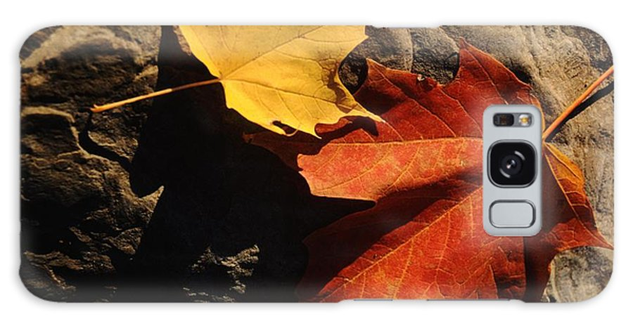 Leaf Galaxy Case featuring the photograph Maple Leaf Pair On Shadowy Rock by Anna Lisa Yoder