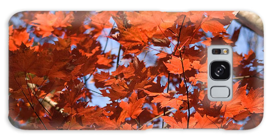 Maple Galaxy S8 Case featuring the photograph Maple Leaves Aglow by Douglas Barnett