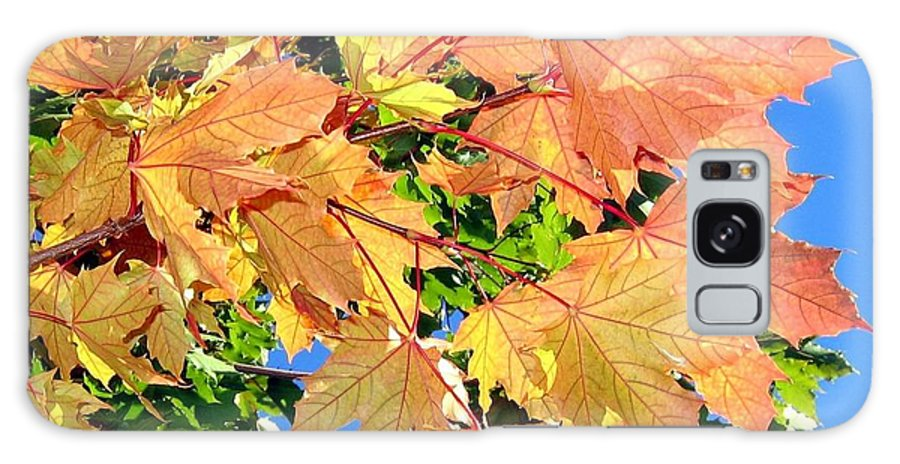 Autumn Galaxy S8 Case featuring the photograph Maple Mania 1 by Will Borden