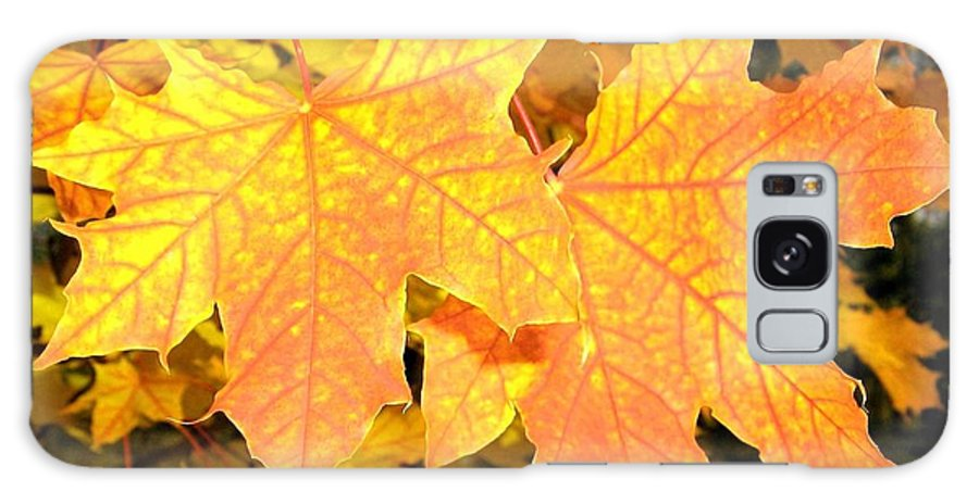 Autumn Galaxy S8 Case featuring the photograph Maple Mania 2 by Will Borden