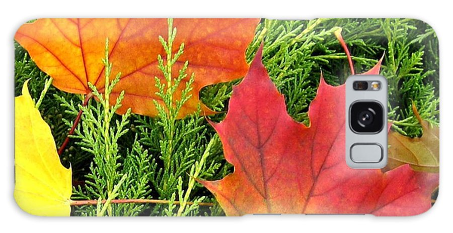 Autumn Galaxy S8 Case featuring the photograph Maple Mania 5 by Will Borden