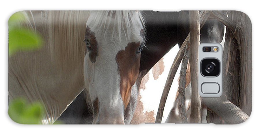 Horses Herd Mares Trees Ranch Farm Acreage Galaxy S8 Case featuring the photograph Mares In Trees by Andrea Lawrence