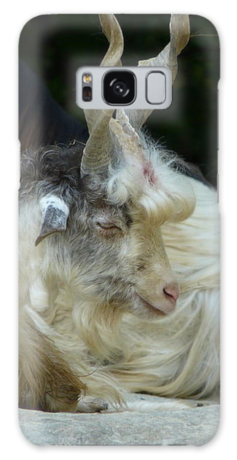 Goat Galaxy S8 Case featuring the photograph Markhor by Valerie Ornstein