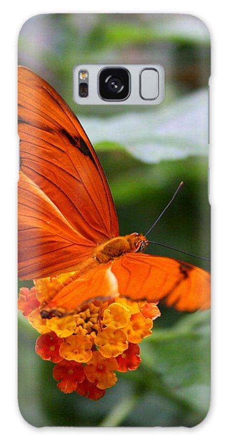 Bug Galaxy Case featuring the photograph Marmalade Delight by David Dunham
