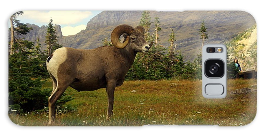 Big Horn Sheep Galaxy S8 Case featuring the photograph Master Of His Domain by Marty Koch