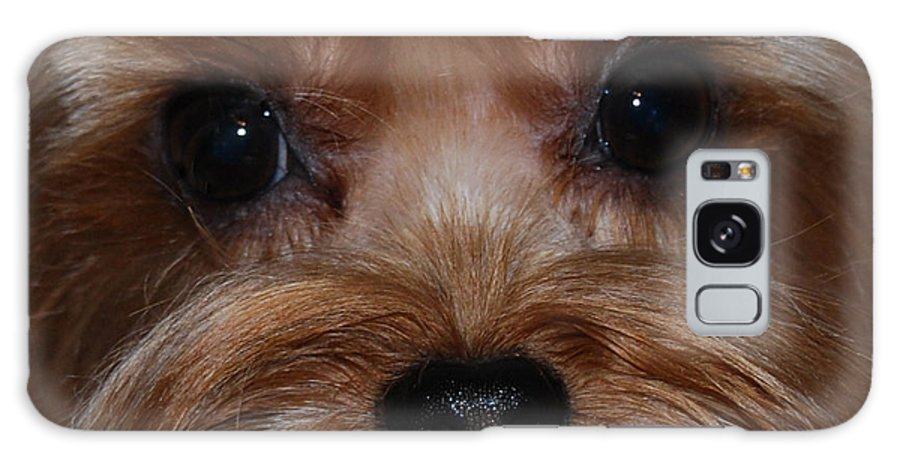 Close Up Shot Of Yorkshire Terrier Galaxy S8 Case featuring the photograph Max by Patricia Motley