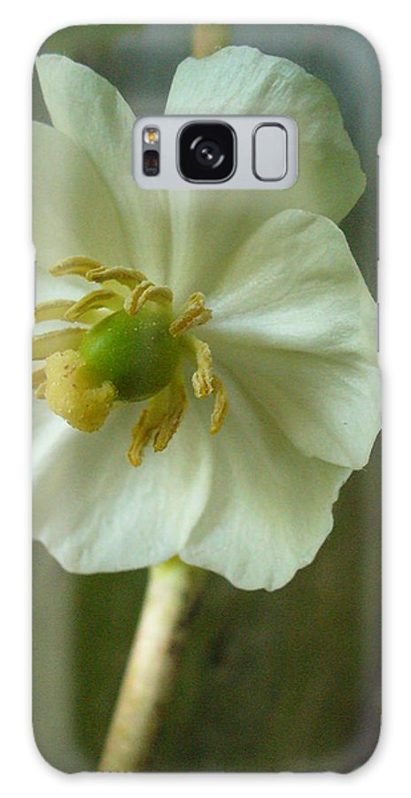 May Apple Galaxy Case featuring the photograph May Apple Blossom by Peggy King