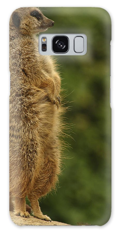 Meercat Galaxy S8 Case featuring the photograph Meercat by Ian Middleton
