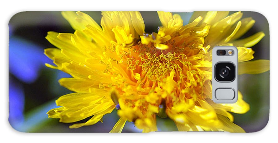 Flower Galaxy S8 Case featuring the photograph Mello Yello by Stephen Anderson