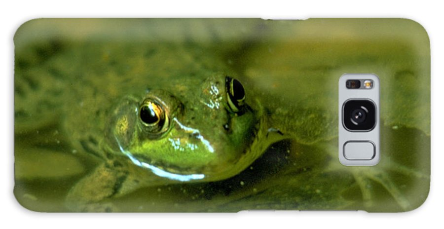Frog Galaxy Case featuring the photograph Mellow Frog by Sven Brogren