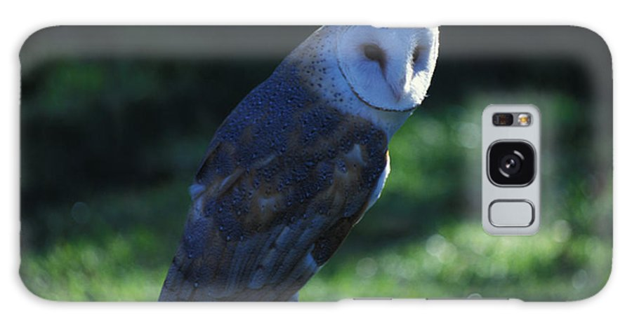 Owl Galaxy S8 Case featuring the photograph Message For Harry Potter by Carl Purcell