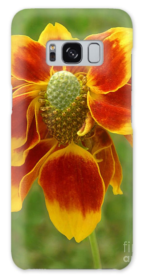 Nature Galaxy S8 Case featuring the photograph Mexican Hat Dance Finale by Lucyna A M Green