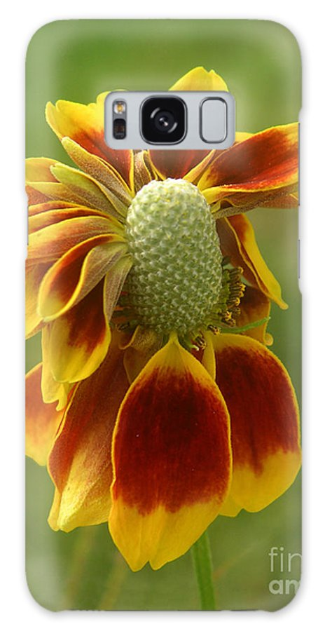 Nature Galaxy S8 Case featuring the photograph Mexican Hat Dance by Lucyna A M Green