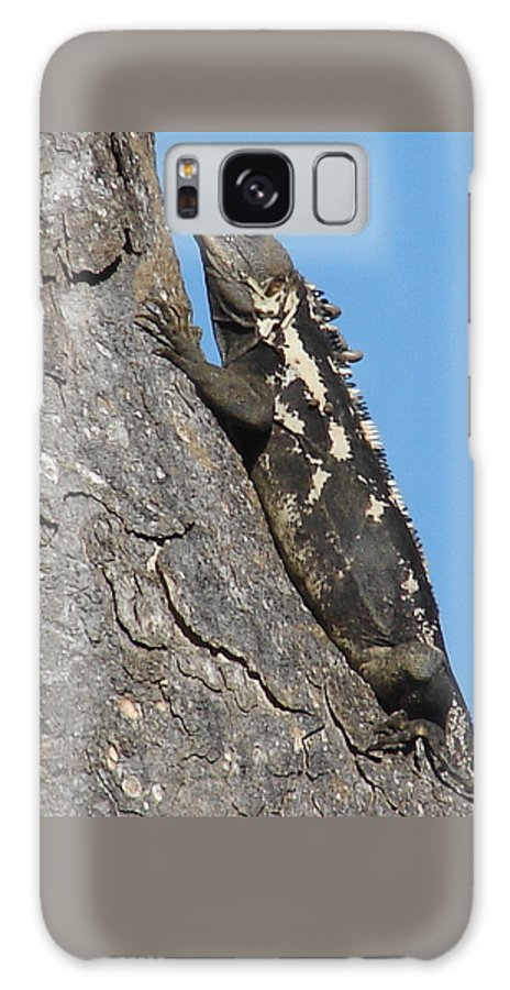 Iguana Tree Brown Blue Sky Galaxy Case featuring the photograph Mexican Treasure by Luciana Seymour