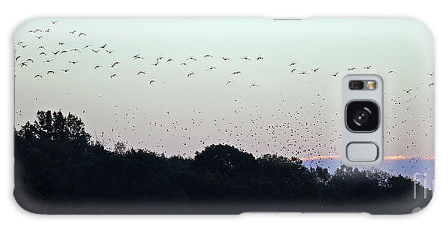 Geese Galaxy S8 Case featuring the photograph Migration Flyway by Steve Gass