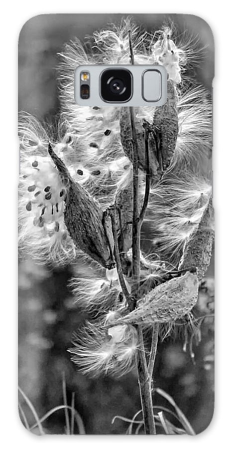 Milkweed Galaxy S8 Case featuring the photograph Milkweed Monochrome by Steve Harrington