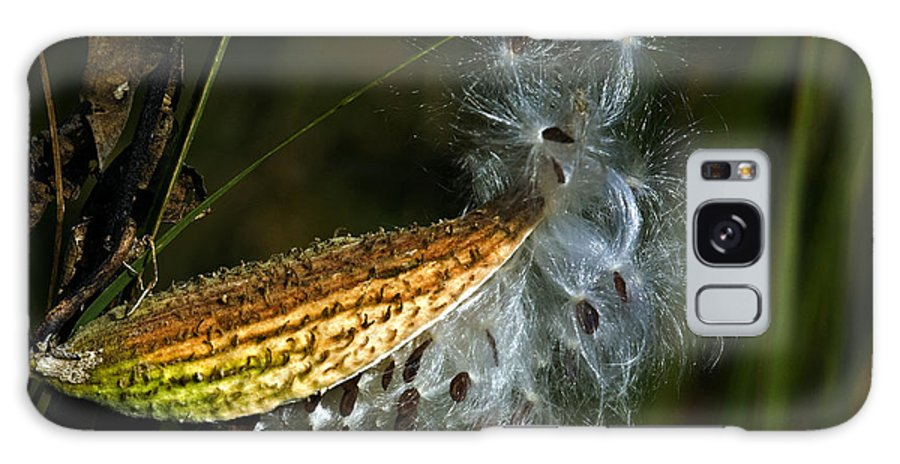 Autumn Galaxy S8 Case featuring the photograph Milkweed Pod by Al Mueller