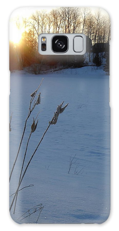 Milkweed Galaxy S8 Case featuring the photograph Milkweed Stems Winter Sunrise by Kent Lorentzen
