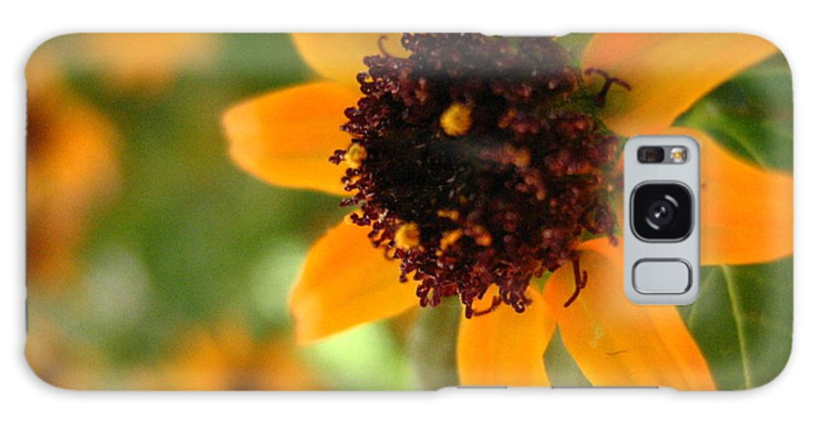 Flower Galaxy Case featuring the photograph Mini Sunflower by Melissa Parks