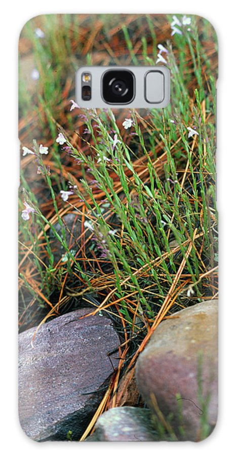 Forest Floor Galaxy Case featuring the photograph Miniature Bells by Randy Oberg