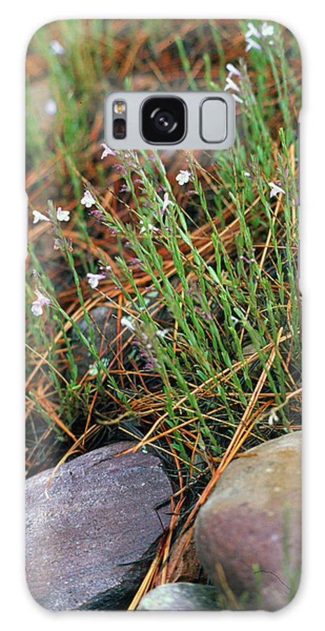 Forest Floor Galaxy S8 Case featuring the photograph Miniature Bells by Randy Oberg