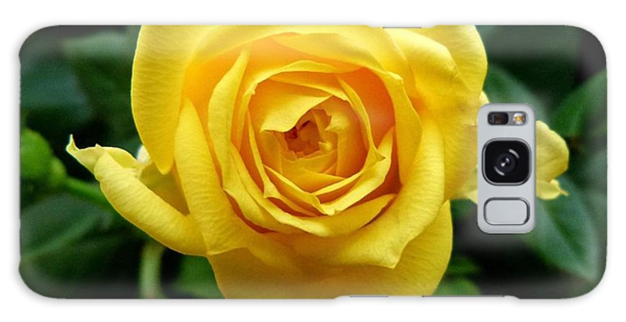 Yellow Rose Galaxy S8 Case featuring the photograph Miniature Yellow Rose by Will Borden