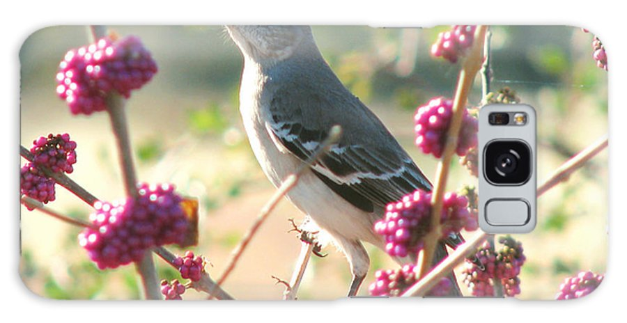 Nature Galaxy S8 Case featuring the photograph Mockingbird Heaven by Peg Urban