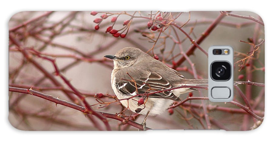Mockingbird Galaxy Case featuring the photograph Mockingbird In Winter Rose Bush by Max Allen
