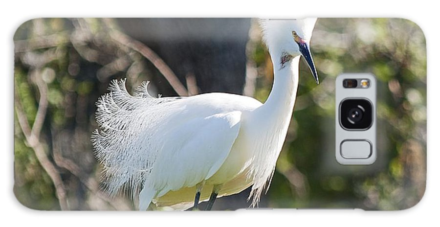 Egret Galaxy S8 Case featuring the photograph Mohawk by Kenneth Albin