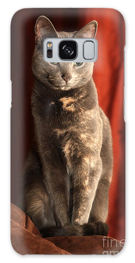 Cat Galaxy S8 Case featuring the photograph Mollie by Amanda Barcon