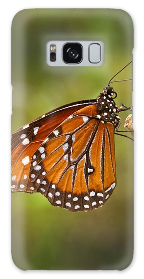 Monarch Galaxy Case featuring the photograph Monarch Butterfly by Heather Coen