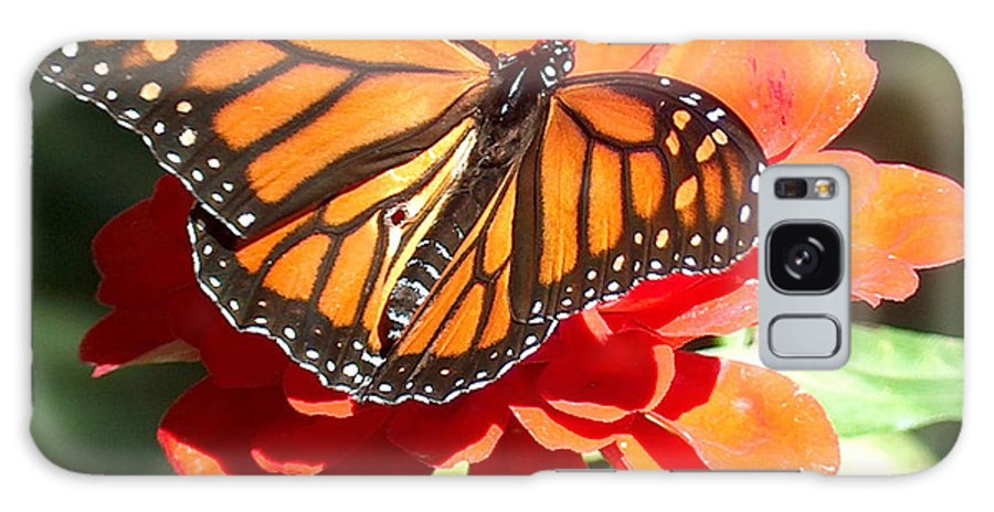 Monarch Butterfly Galaxy S8 Case featuring the photograph Monarch Butterfly by Racquel Morgan