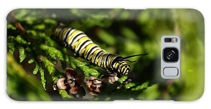 Nature Galaxy S8 Case featuring the photograph Monarch Caterpillar by Denise Ashley