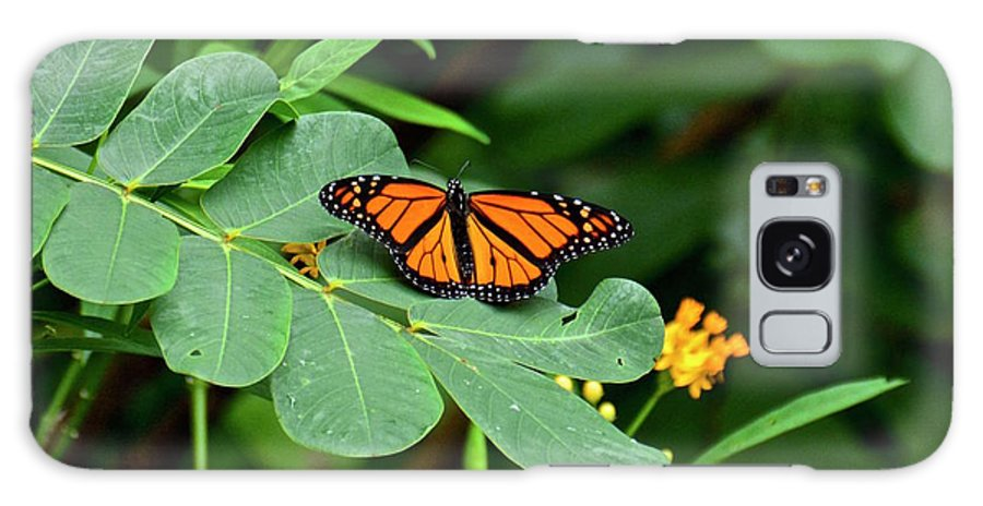 Butterfly Galaxy S8 Case featuring the photograph Monarch Butterfly Resting On Cassia Tree Leaf by Carol Bradley