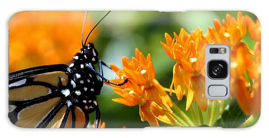 Betsy Lamere Galaxy S8 Case featuring the photograph Monarch On Asclepias by Betsy LaMere
