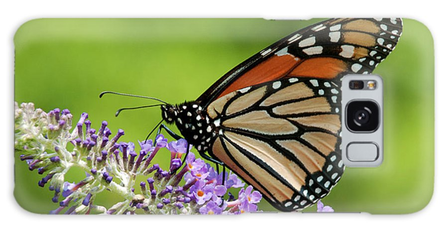 Monarch Butterfly Galaxy S8 Case featuring the photograph Monarch On Butterfly Bush by Lara Ellis