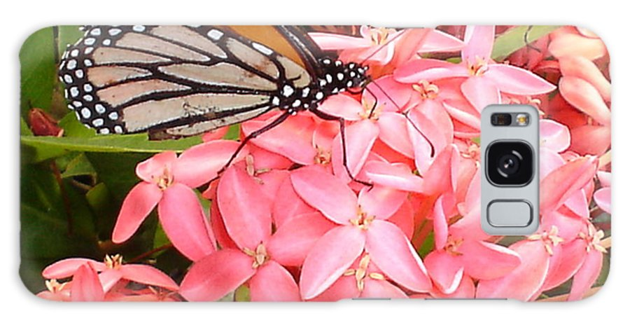 Butterfly Galaxy Case featuring the photograph Monarch On Huneysuckle by Chandelle Hazen