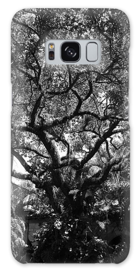 Black And White Galaxy S8 Case featuring the photograph Monastery Tree by Rob Hans