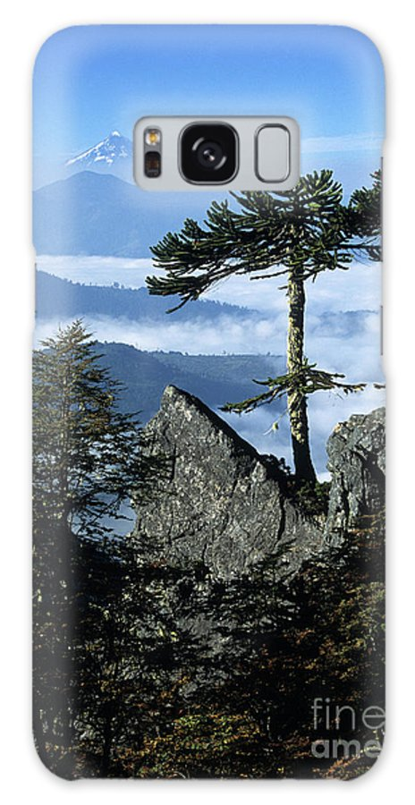 Chile Galaxy Case featuring the photograph Monkey Puzzle Trees In Huerquehue National Park by James Brunker