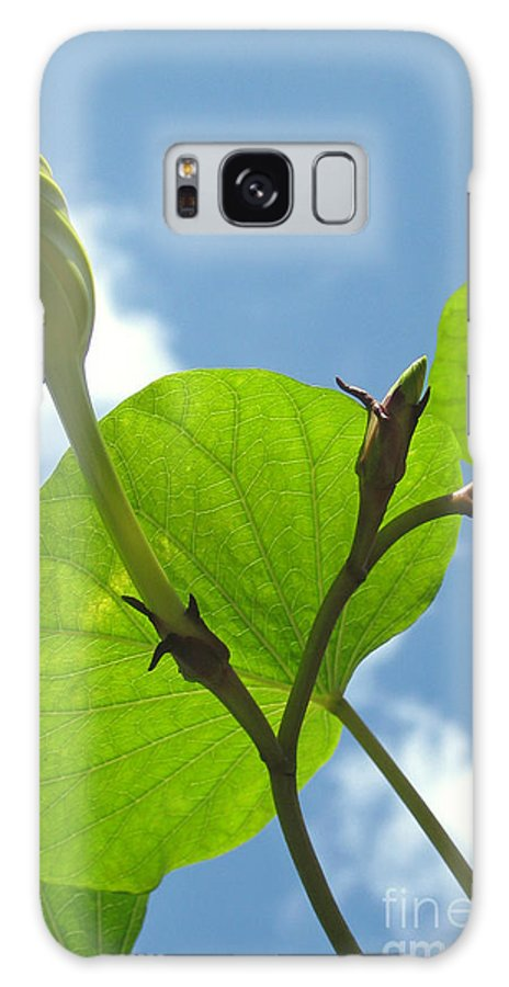 Moonflower Galaxy S8 Case featuring the photograph Moonflower Vine Bud To The Sky by Anna Lisa Yoder