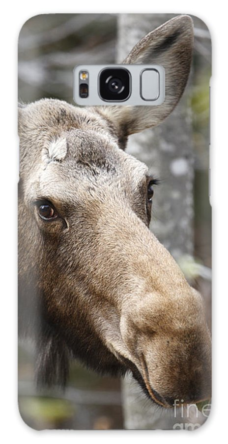 Mountain Galaxy S8 Case featuring the photograph Moose - White Mountains New Hampshire Usa by Erin Paul Donovan