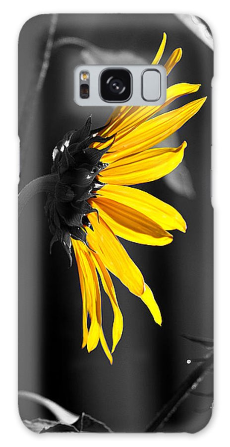 Clay Galaxy S8 Case featuring the photograph Morning Sun by Clayton Bruster