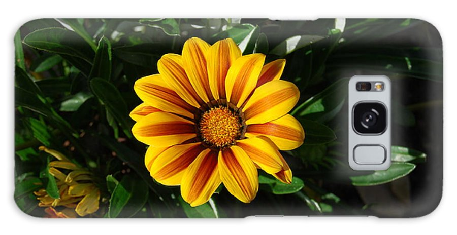 Flowers Galaxy S8 Case featuring the photograph Morning Sun by Michael L Gentile