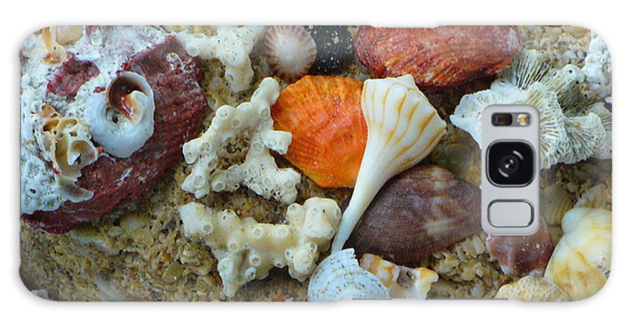 Shells Galaxy Case featuring the photograph Morning Treasures by Peggy King