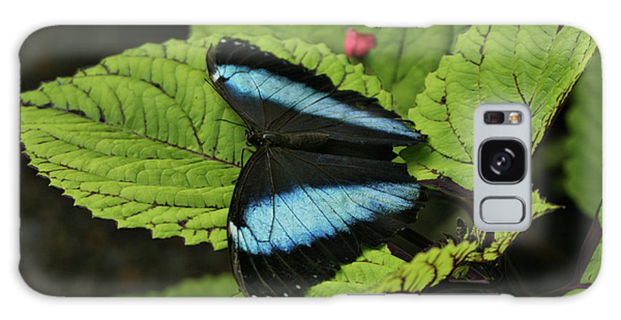 Butterfly Galaxy S8 Case featuring the photograph Morpho Butterfly by Sandy Keeton