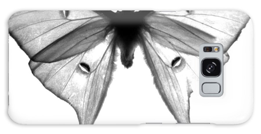 Moth Galaxy S8 Case featuring the photograph Moth by Amanda Barcon